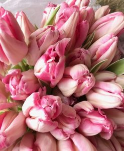 The White Orchids Florists - Tulips Raspberry Ripple