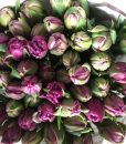 Pink Parrot Tulips